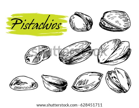 pistachio set sketch. pistachio illustration by hand, walnut, retro style, vector object.