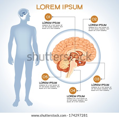 Pituitary. Modern medical infographics. Internal organs in a human body. Anatomy of people - stock vector