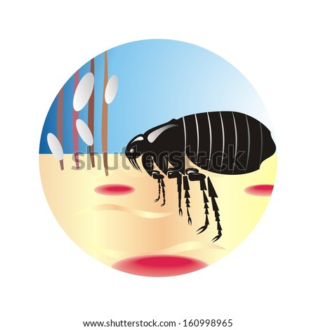 Plague of lice  - stock vector