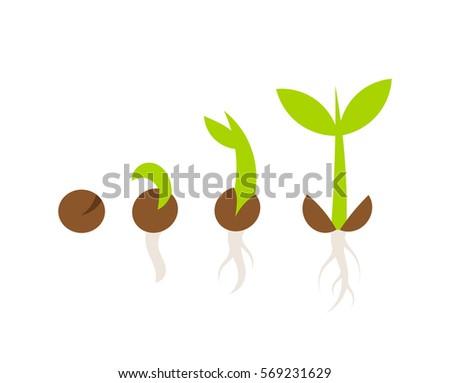 Shutter seed