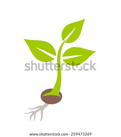 Plant seedling. Vector illustration - stock vector