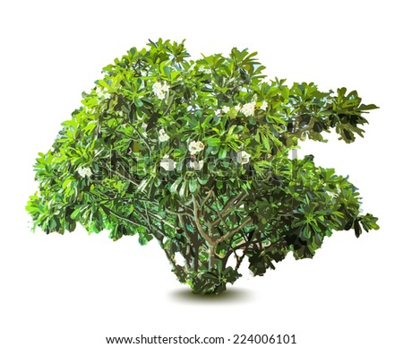 Plant with flowers and leaves. Decorative tree. Vector - stock vector