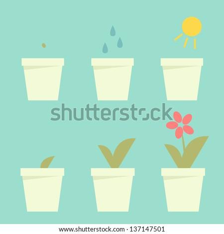 Planting flower info graphic vector - stock vector