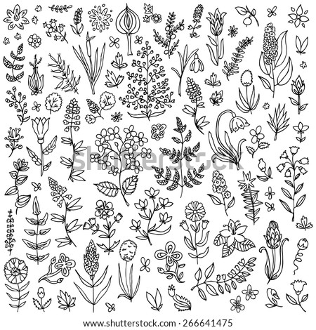Plants and flowers set - stock vector