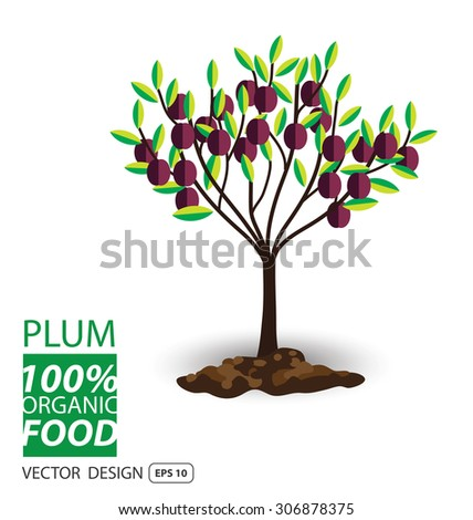 Plum, fruits vector illustration. - stock vector