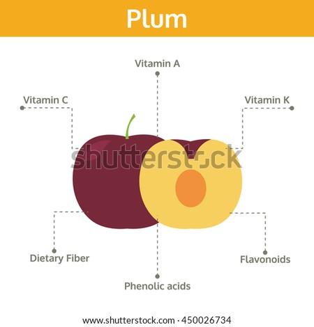 Labeled Diagram Of Fruit Online Schematic Diagram