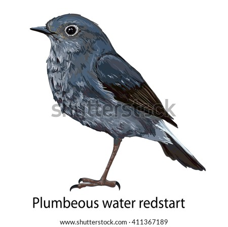 plumbeous water-redstart bird vector illustration art, wildlife, Illustration bird. bird flying, animal, bir silhouette