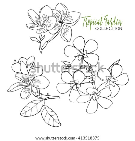 Simple Flower Drawing Ideas Draw Easy Flower Drawings Simple Rose Drawing Pinterest further Black And White Lemon Lime Or Orange 1252343 furthermore White Wall Textures 18 02 2017 as well Crosses For Easter furthermore Search. on lime green pattern background