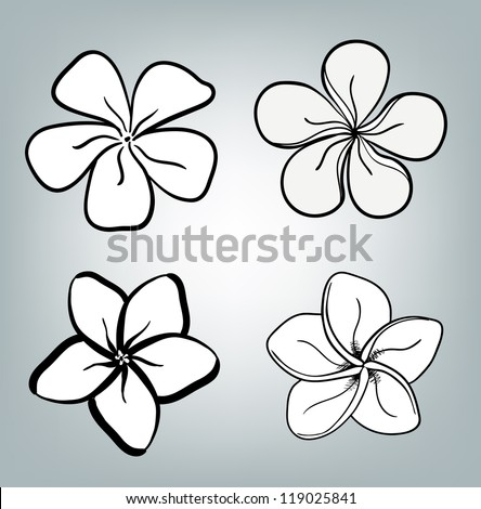 Plumeria Flower Drawing Designs Plumeria vector. pink flower.