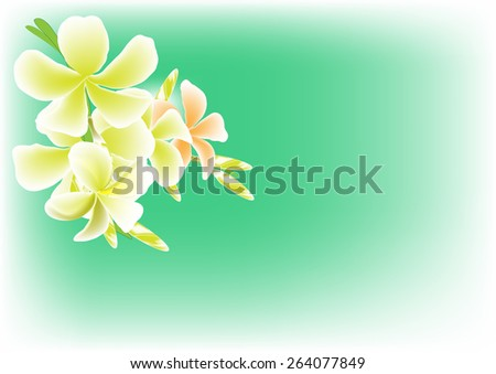 Plumeria vector background graphics