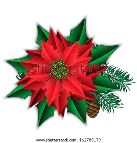 Poinsettia and fir branch with cone isolated on white. Vector illustration. - stock vector
