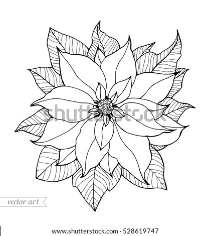 poinsettia coloring pages for adults - photo#17
