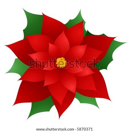 Poinsettia - vector  illustration - stock vector