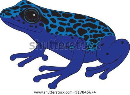poison dart frog vector illustration stock vector royalty free rh shutterstock com Red-Eyed Tree Frog Glass Frog
