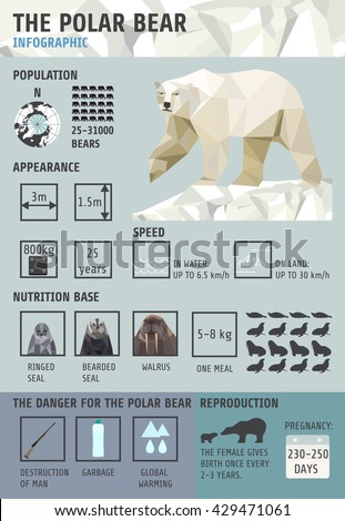 Polar bears Infographics. Flat design element. vector illustration.North Pole , fauna . Statistical information . - stock vector