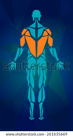 Polygonal anatomy of male muscular system, exercise and muscle guide. Human muscle vector art, back view. Vector illustration for sport equipment - stock vector