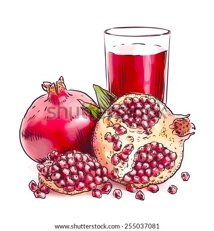 Pomegranate. Vector illustration. Watercolor imitation. - stock vector