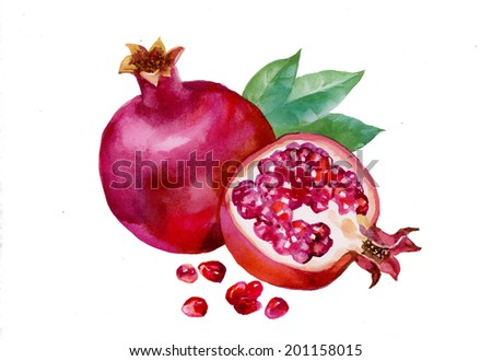 Pomegranates with green leaves isolated on white background vector - stock vector