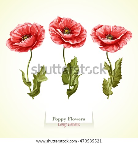 Poppy flowers illustration watercolor hand drawn stock vector poppy flowers illustration watercolor hand drawn set of three poppy flowers vector mightylinksfo