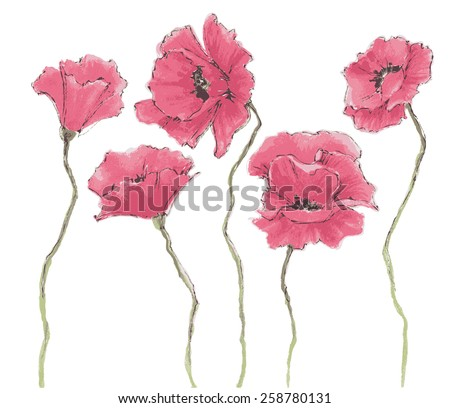 Poppy flowers watercolor - stock vector