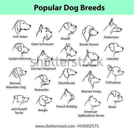 Popular Dog Breeds Profile Faces. Dog Silhouette Portraits set.  - stock vector