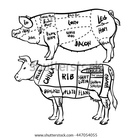 678 besides Horse farming meat production agriculture besides Meatcharts besides Diagram Of Cuts Meat From A Cow likewise Hubpages. on sheep cuts of meat chart