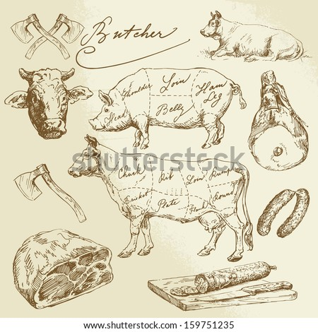 pork and beef cuts - hand drawn set - stock vector