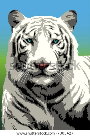 Portrait of white Bengal tiger looking intently (With several layers) - stock vector