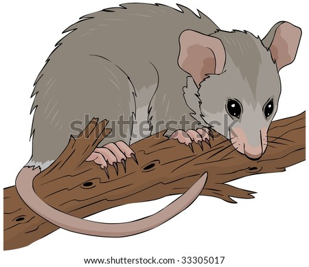 Possum hanging on a tree branch vector illustration - stock vector