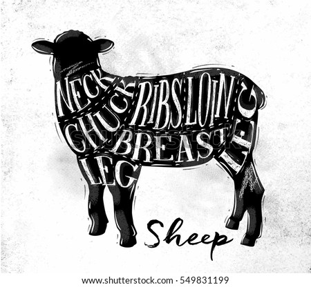 Poster sheep lamb cutting scheme lettering neck, chuck, ribs, breast, loin, leg in vintage style drawing on dirty paper background