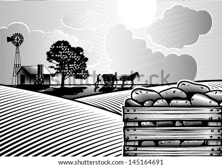 Potato field in woodcut style, vector - stock vector