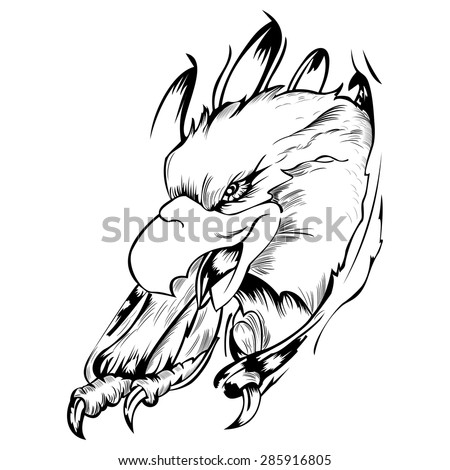 predator eagle on white background claws tearing something