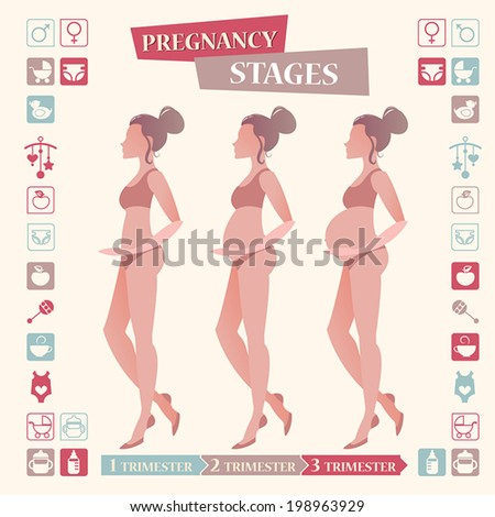 Pregnancy stages with flat icon set for your design - stock vector