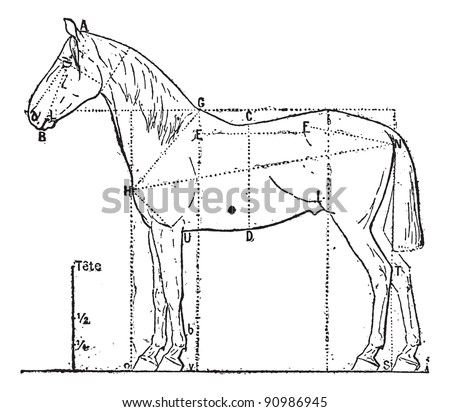 Proportions of the horse,  vintage engraved illustration. Dictionary of words and things - Larive and Fleury - 1895. - stock vector