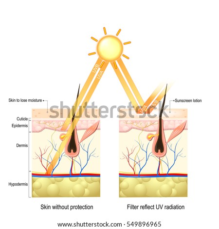 Protect human skin from UVA, UVB rays. without protective cream rays penetrate deep into skin damaging collagen fibers skin loses moisture. The sunscreen lotion protect the skin from harmful radiation