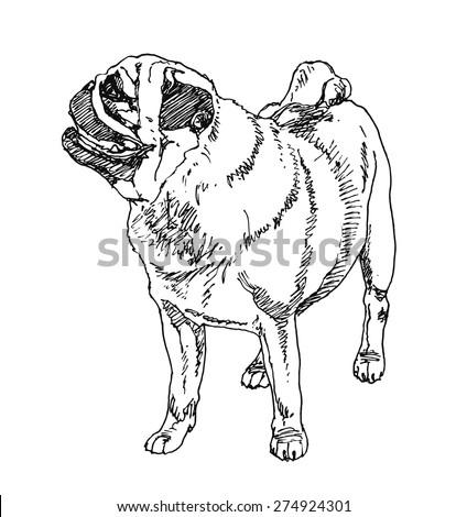 Pug-Dutch mastiff Dog. hand drawn. Vector illustration - stock vector