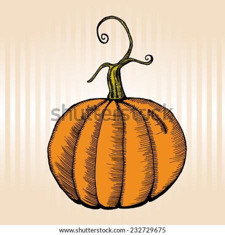 pumpkin - stock vector