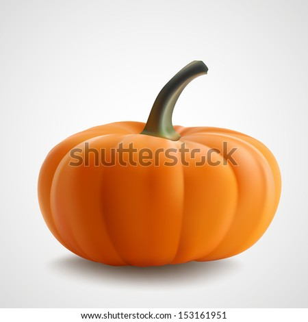 Pumpkin isolated on white. Realistic vector illustration