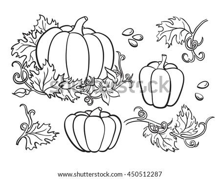 Pumpkin Vector Drawing Set Isolated Outline Vector de stock (libre ...
