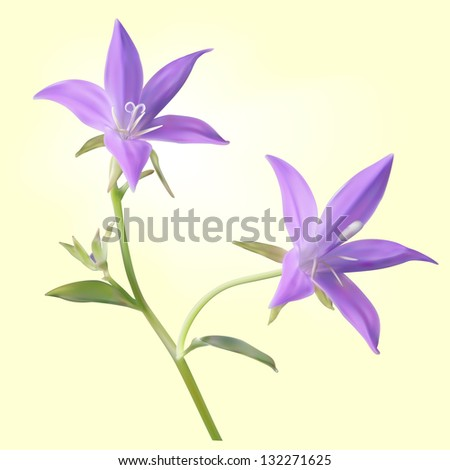 Purple bellflowers on an yellow background - stock vector
