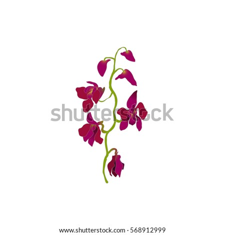 Purple orchid, isolated branch oh white background. Vector illustration