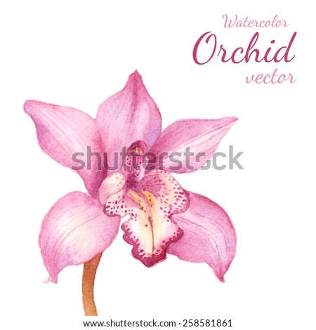 Purple orchid vector watercolor drawing. Floral background - stock vector