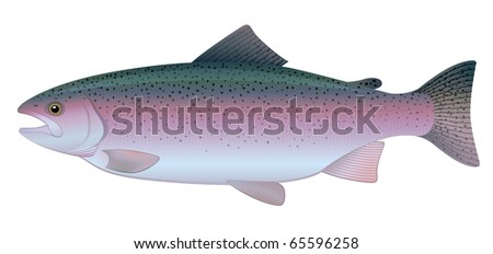 """Rainbow Trout (Oncorhynchus mykiss) freshwater fish.  """"Full compatible. Created with gradients."""" - stock vector"""