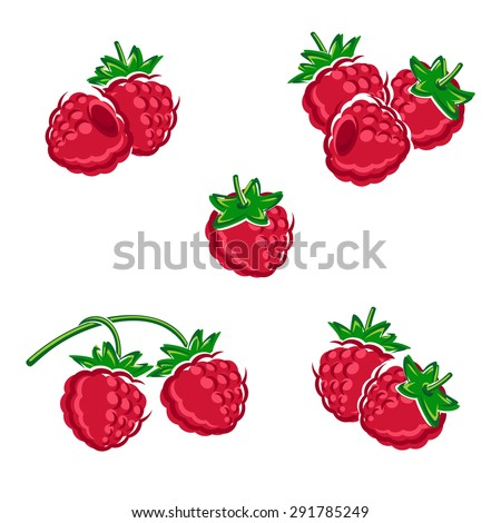 Raspberry set. Vector - stock vector