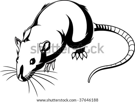 Rat Graphic - stock vector