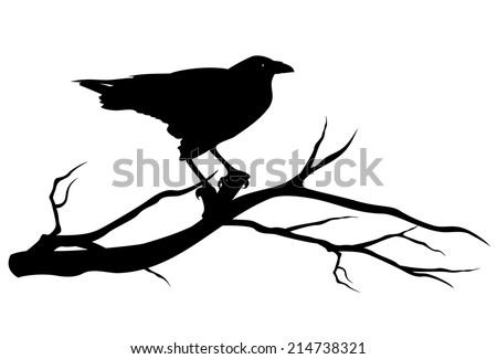 raven bird on tree branch - black vector silhouette on white - stock vector