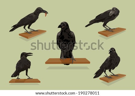 Raven birds with set, illustration vector design. - stock vector
