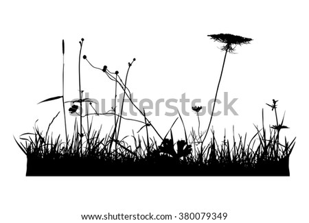 Real plant traced silhouettes. Black and white, Weed, meadow - vector illustration