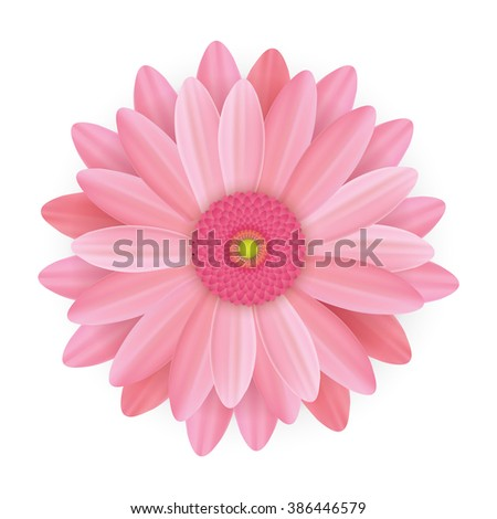 Realistic beautiful pink flowers illustration