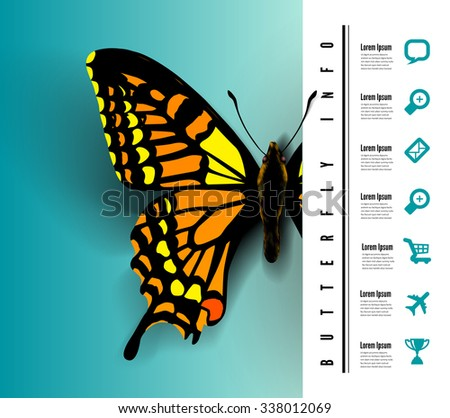 Realistic butterfly top view - stock vector
